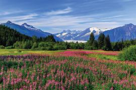 Mountains with flowering meadows