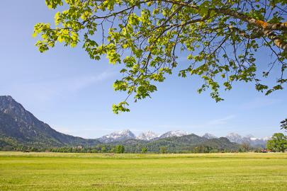 Green field with rocky mountains in the distance with leafy canopy overhead