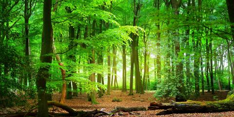 Light in a leafy green forest