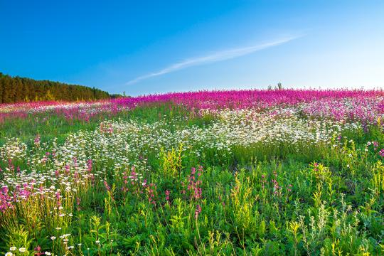 Field of flowers under blue sky